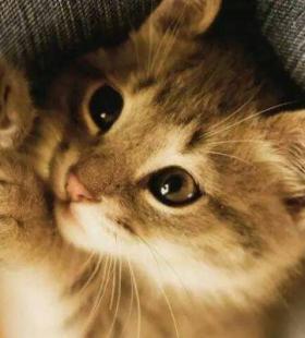 微信QQ高清可爱小动物QQ高颜值萌宠乖乖好看头像