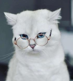 超可爱2021最新小动物QQ微信头像大全