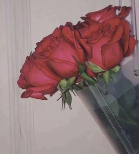 唯美小清新手机高清壁纸图片红色玫瑰520