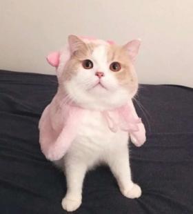 猫咪情侣头像图片2020精选 高清可爱情侣头像大全
