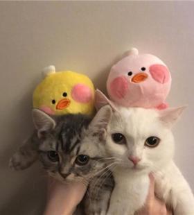 2020高清可爱猫咪头像图片大全