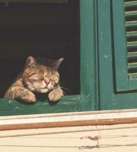 午后窗户小憩的可爱猫咪手机高清清新壁纸