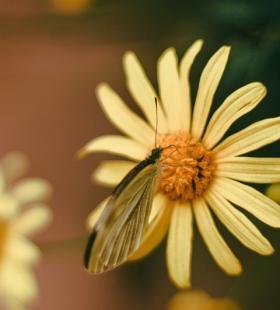 好看蝴蝶唯美意境背景手机壁纸图片