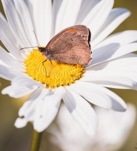 在植物上休息的唯美蝴蝶高清手机壁纸图片大全