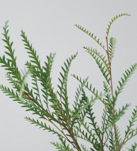 唯美小清新植物花卉高清手机壁纸图片