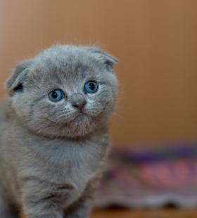 娇小可爱的小奶猫高清电脑桌面壁纸图片大全