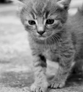 神情可爱萌的小幼猫高清壁纸图片大全