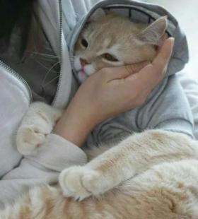 微信QQ可爱猫咪大全抱猫咪的高清呆萌头像