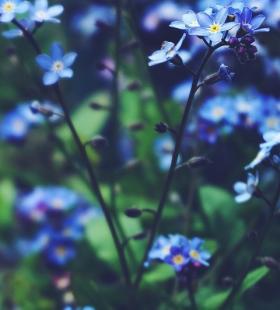 梦幻炫彩唯美花朵手机壁纸图片