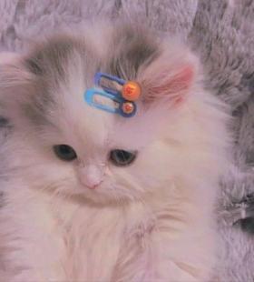 微信QQ最新猫咪搞怪可爱小猫猫可爱合集头像