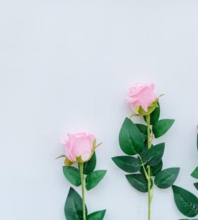 小清新文雅玫瑰花浓情绽放唯美桌面壁纸图片