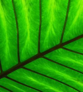 唯美小清新绿叶纹理高清电脑桌面壁纸图片