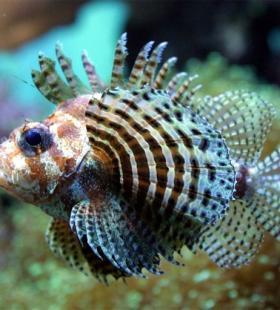 好看海洋里各种奇妙的海底生物图片大全