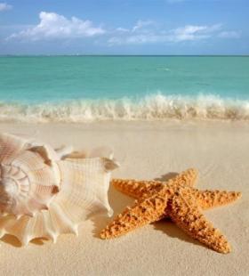 唯美海洋生物海星图片大全
