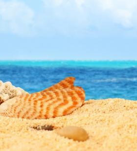 最新沙滩上的贝壳图片大全