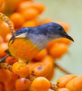 站在树枝上的可爱小鸟超清近距离特写手机壁纸图片