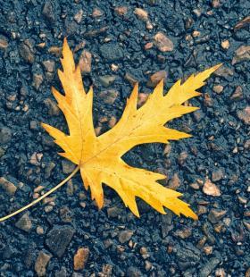 掉落下来的枫叶超美高清壁纸图片大全