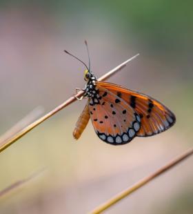 超唯美蝴蝶翅膀好看高清图片壁纸