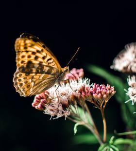蝴蝶在鲜花上采蜜高清唯美桌面图片壁纸