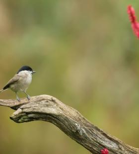 憨态可掬的可爱小鸟高清野生动物壁纸