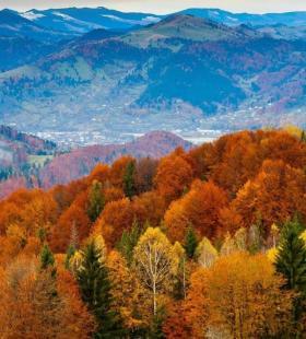 秋天泛红发黄的森林唯美高清风景手机壁纸图片