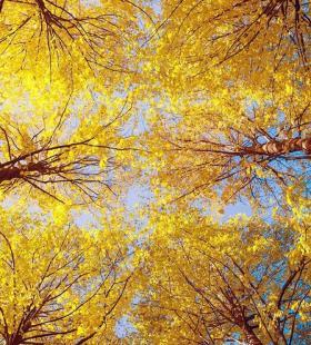 金色好看的树林风景高清手机壁纸图片