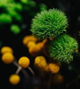 花束图片-好看色彩缤纷的花束图片大全