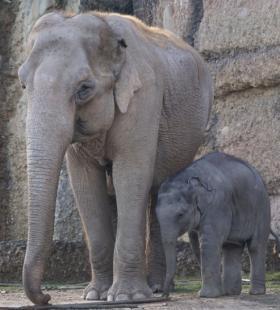 【野生大象图片】好看野生大象图片大全