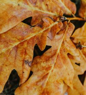 落叶图片-精选黄色的落叶图片大全