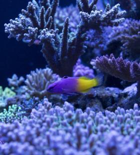 【海底世界图片】最新绮丽的海底世界图片大全