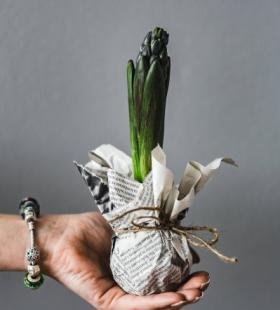 秧苗图片-唯美自己种植的秧苗图片大全