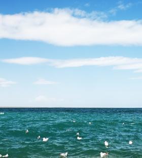 青海湖的海鸥唯美风景高清桌面壁纸图片