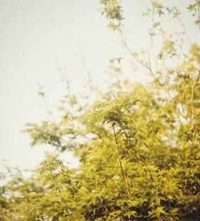 小清新唯美自然风景手机背景壁纸图片