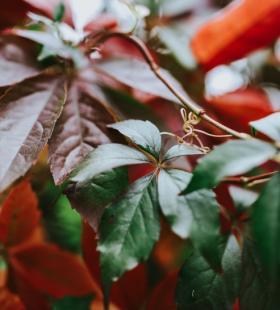 红色树叶唯美高清桌面壁纸图片大全
