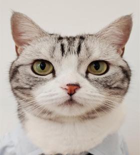 眼里只有你的可爱萌宠猫咪高清手机壁纸图片