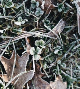 冬天早晨被冰霜覆盖的植物图片大全