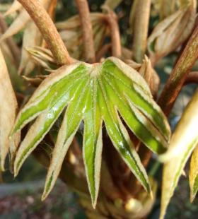 植物发芽唯美风景壁纸图片