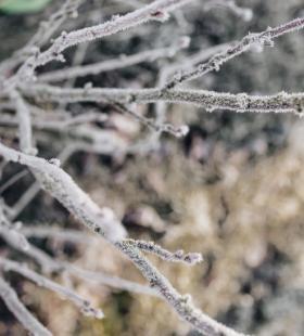 雪天植物唯美小清新风景电脑壁纸图片