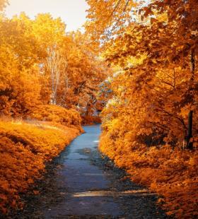 秋叶飘飘唯美个性风景壁纸图片大全