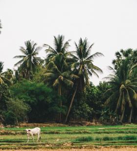 海滩椰子树超美风景高清桌面壁纸美图大全