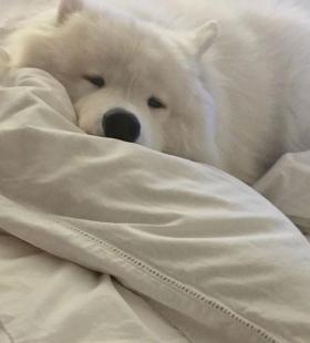 三月最新可爱狗狗微信热门高清头像