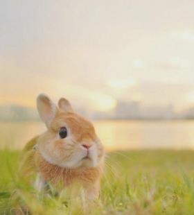 最新可爱小兔子高清呆萌微信头像