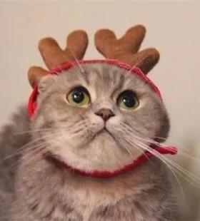 超可爱黑白小猫咪圣诞主题高清情侣头像大全