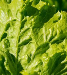 新鲜绿色的蔬菜美食图片大全