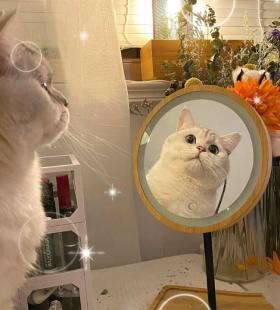 超级萌的喵星人爱猫人士专用情头图片