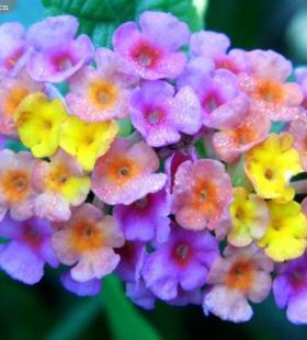 美丽的七彩缤纷花朵图片