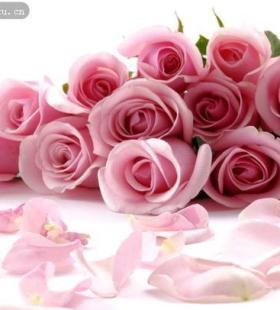 一束唯美粉玫瑰素材图片