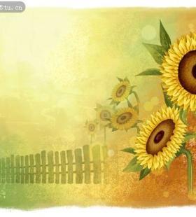 唯美灿烂向日葵背景素材图片