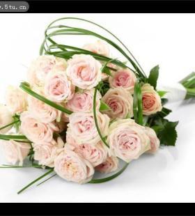 清新素雅的粉色玫瑰花花束图片